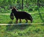 27-06-2012  jimmi-vom-haus-emy