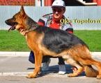 oks-euro-dog-show